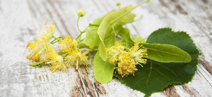 tea tree l 39 huile essentielle indispensable en aromath rapie. Black Bedroom Furniture Sets. Home Design Ideas
