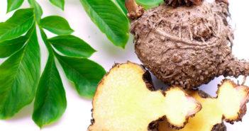 Konjac, le plus puissant coupe faim naturel minceur