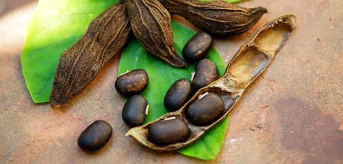 Mucuna, la plante ayurvédique pour le bien-être mental, physique et sexuel