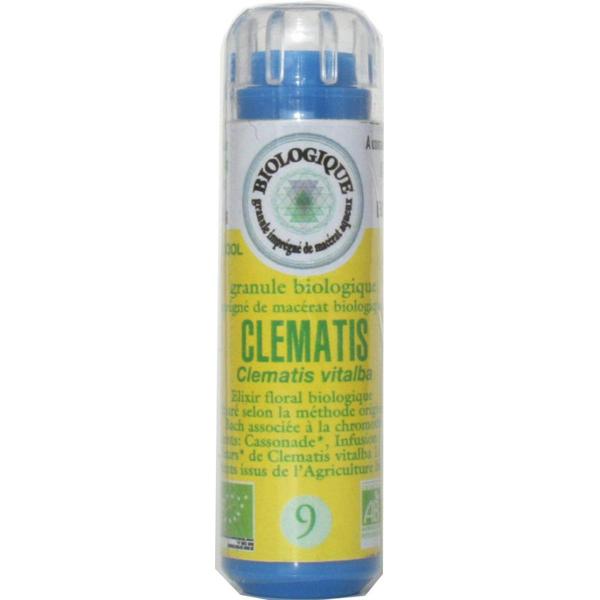 Clématite (Clematis) 09